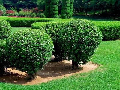 lawn-landscape-maintenance-valrico