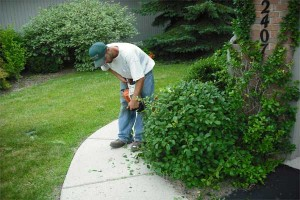 Tree-and-Shrub-Pruning-(10)
