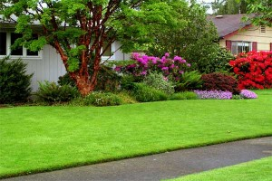 be_green_texas_lawn_care