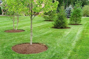 twin-powered-lawn-service-colonial-heights-va